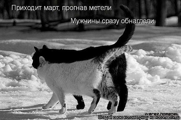 ВЕСЕННИЙ КОТОУЛЕТ