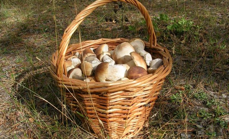 Съедобные грибы поздней осени