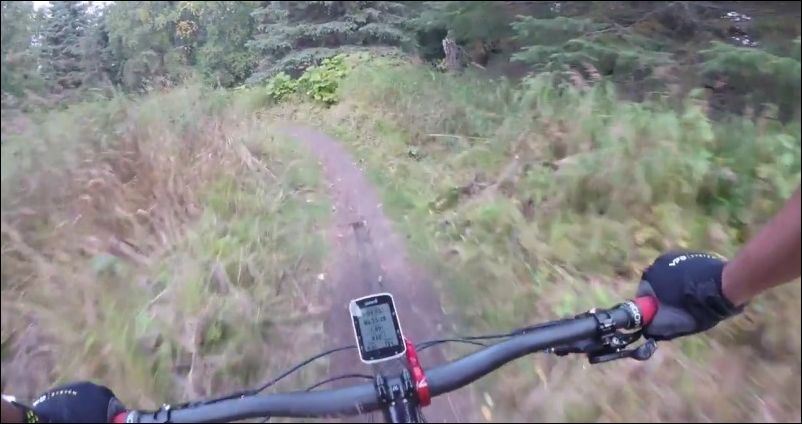Медведь напугал велосипедиста