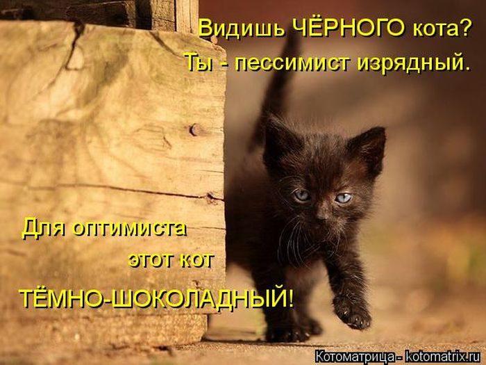 Котейки, собаки и один конь желают всем хорошего настроения!