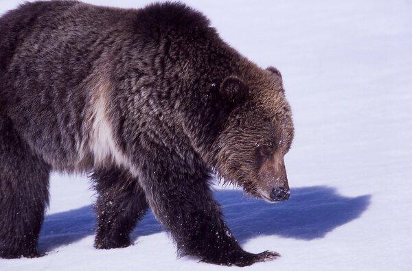 Медведь, фото https://pixabay.com/ru/