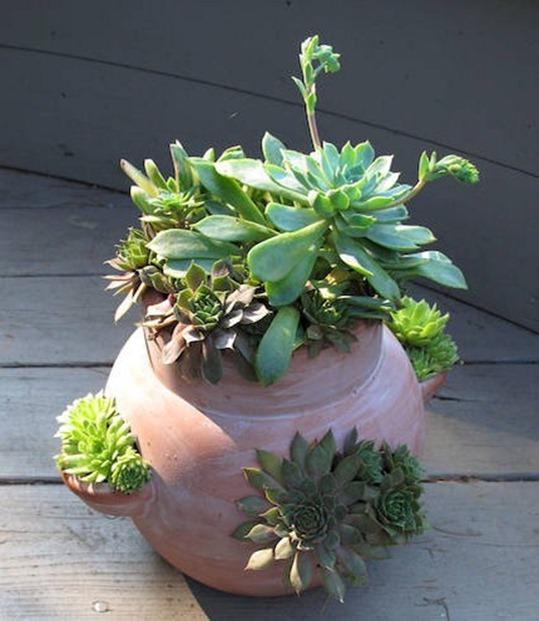 Зелёные растения украшают и дополняют
