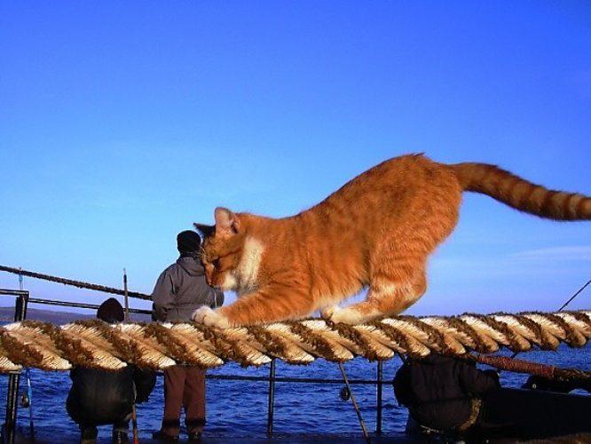 Корабельный кот Фрол (Заключ…