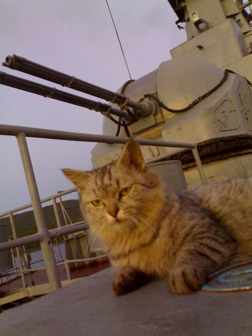 Корабельный кот ФРОЛ (Королева)