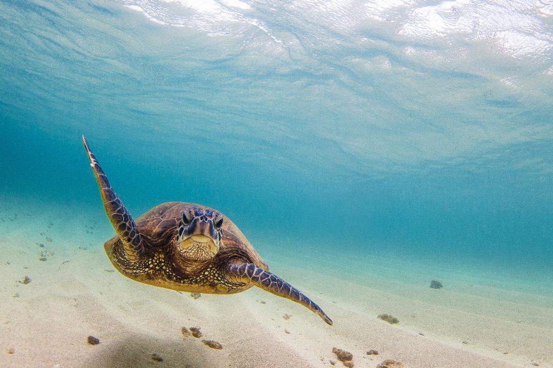 25 прекрасных фотографий о тёплых краях и песчаных пляжах - 12_1