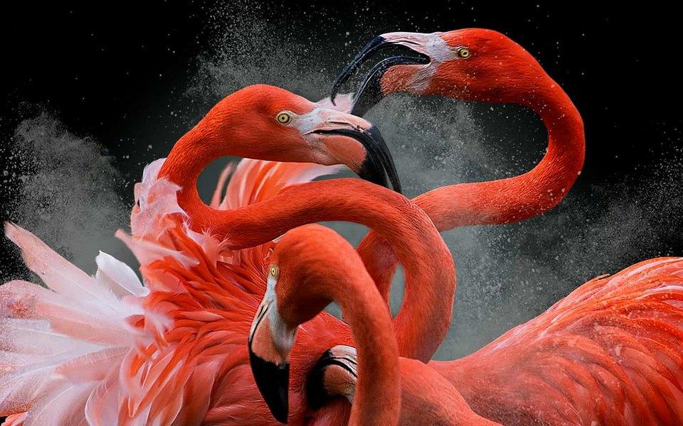 Лучшие фотографии птиц с кон…