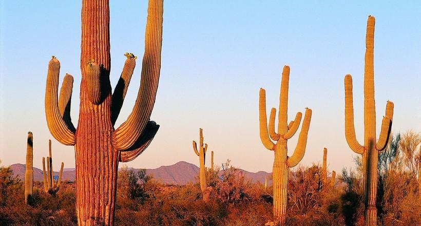 Nature desert scenery widescreen  02 31 1440x900