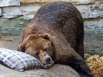 Опять полиция над медведями издевается