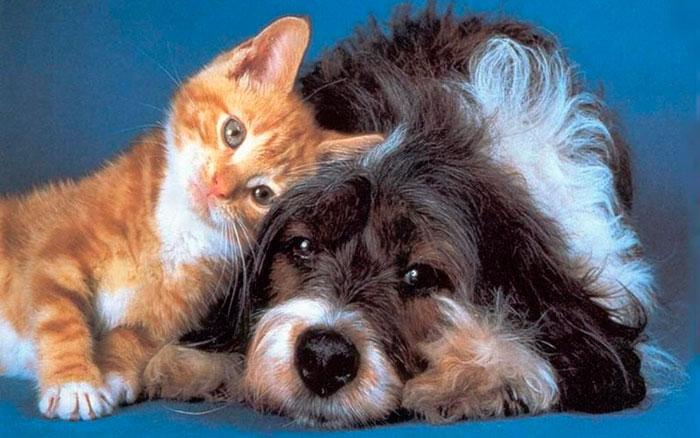 Как избавиться от шерсти домашних животных – 3 простых способа