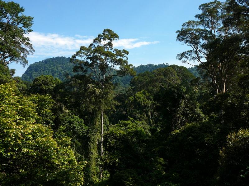 Тропические леса острова Борнео. Фото