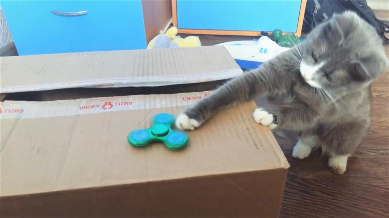 Приколы с котами Топовая нудятина