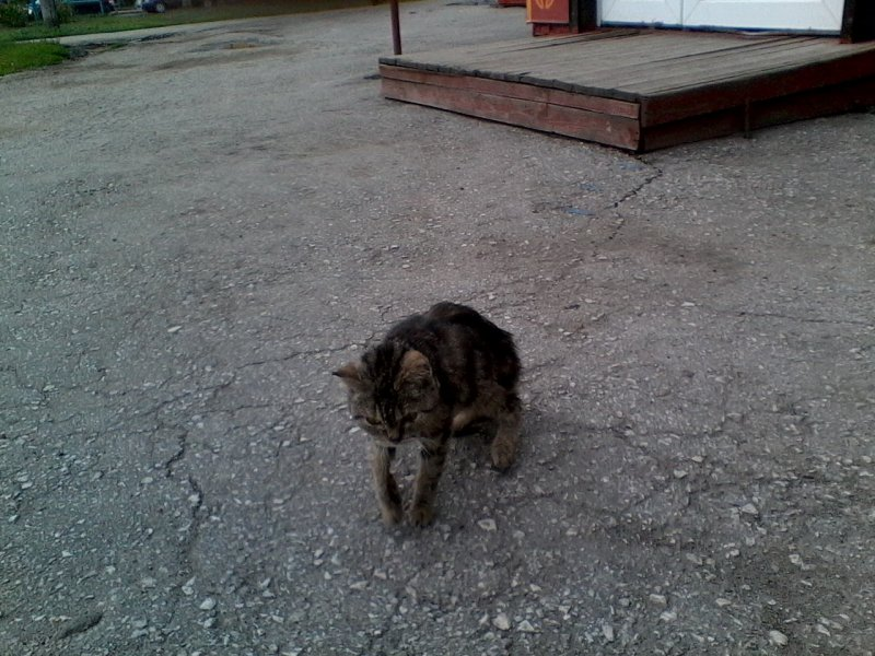 Тощая кошка едва передвигала лапы, ковыляя по двору, но никто не замечал ее