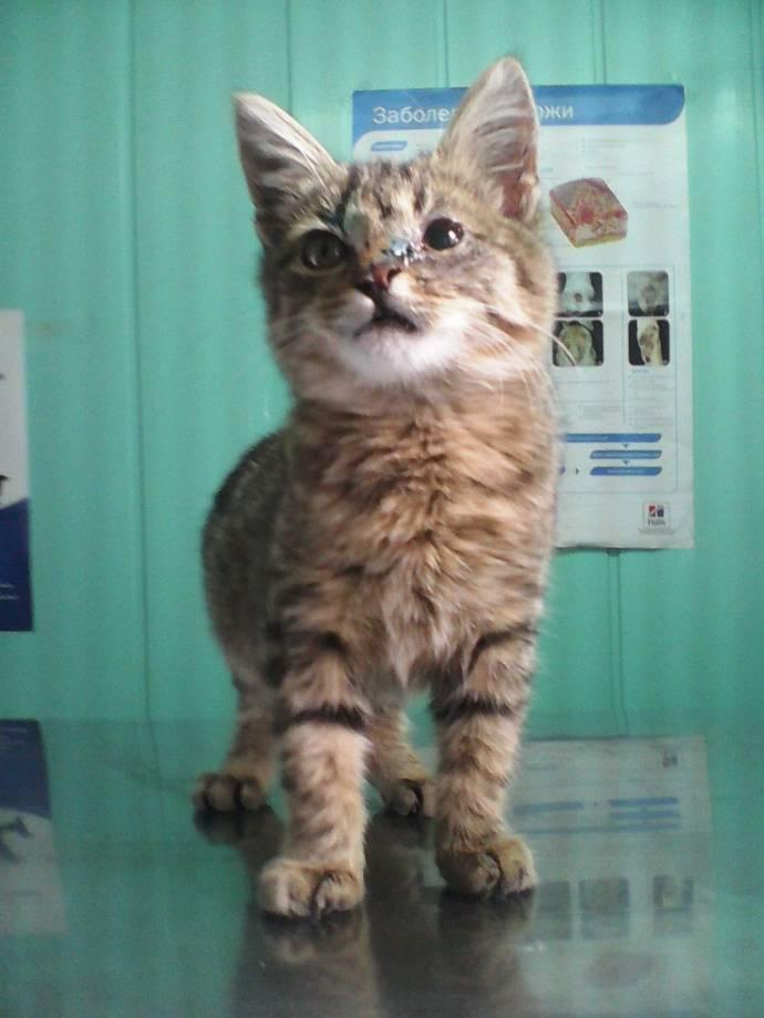 Воронежский ветеринар спас котенка, пострадавшего от рук жестоких школьников