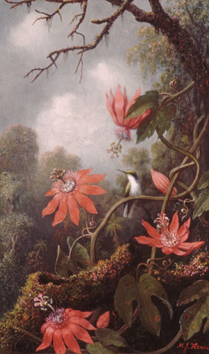 File:Heade Martin Johnson Hummingbird And Passionflowers.jpg