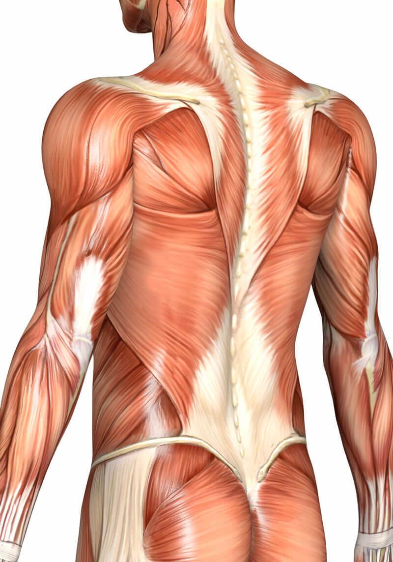 Почему болит спина: 6 возможных причин