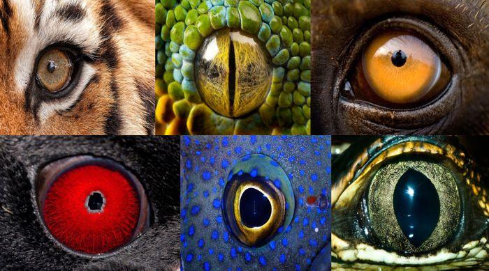 Необычные глаза животных