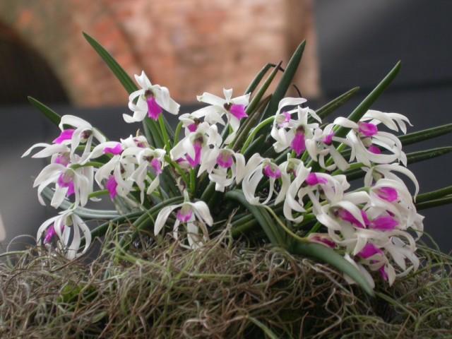 7 самых оригинальных комнатных орхидей