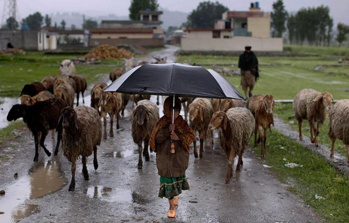 Как живут пастухи по всему миру