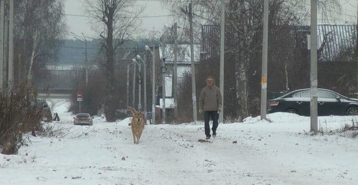 Пёс прожил на перекрёстке бо…