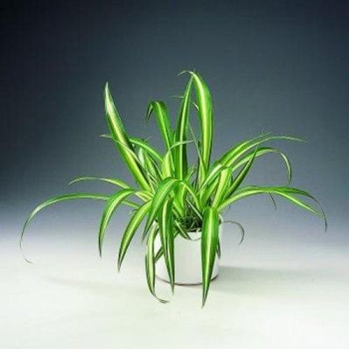 ТОП-10 комнатных растений для лентяйки