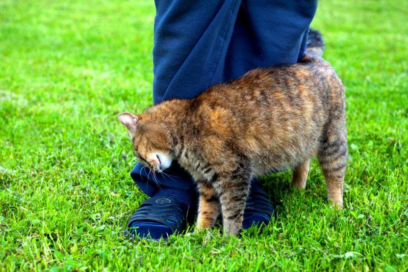 Почему нельзя отгонять кошек, когда они трутся об тебя
