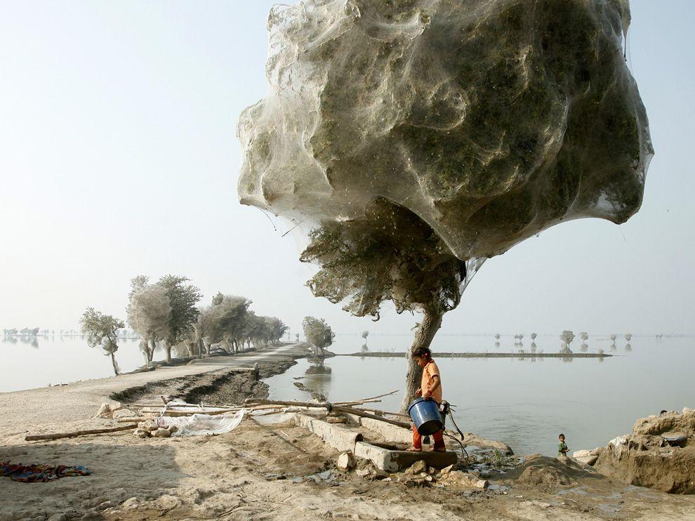 1411 Лучшие фото National Geographic за декабрь 2011