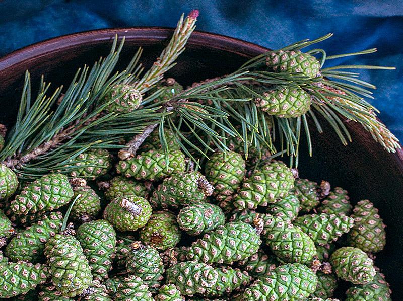 Рецепт варенья из сосновых шишек