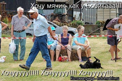 Котоматрица: Хочууууу!!!!! Хочууууу!!!! Хочууууу!!! Хочу мячик, как у Бобикааа!!!