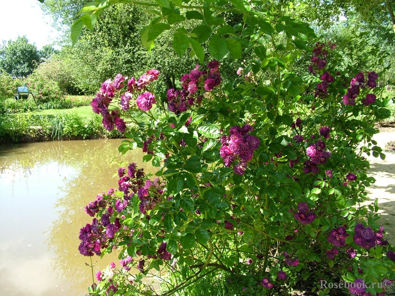 Розарий Les Chemins de la Rose, Франция