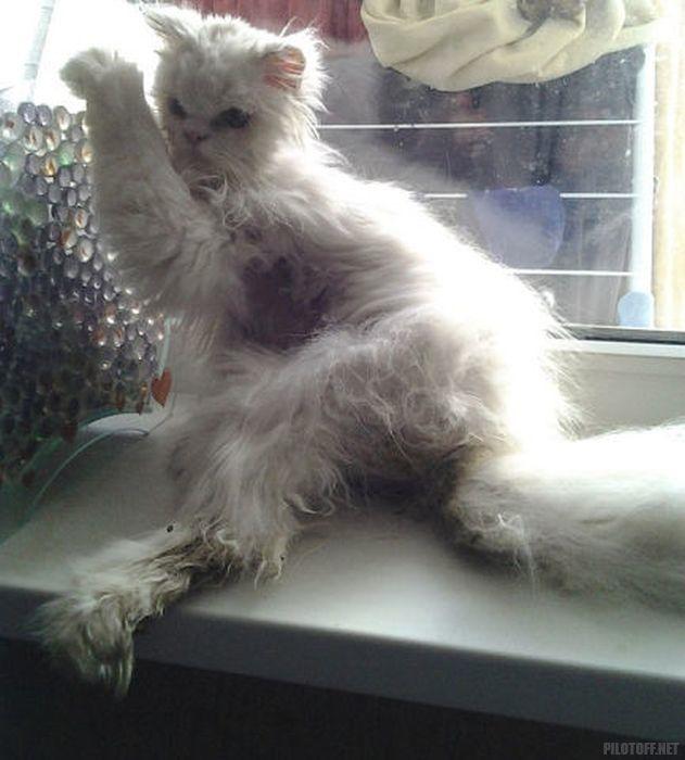Невероятная трансформация спасенного кота кот, трансформация