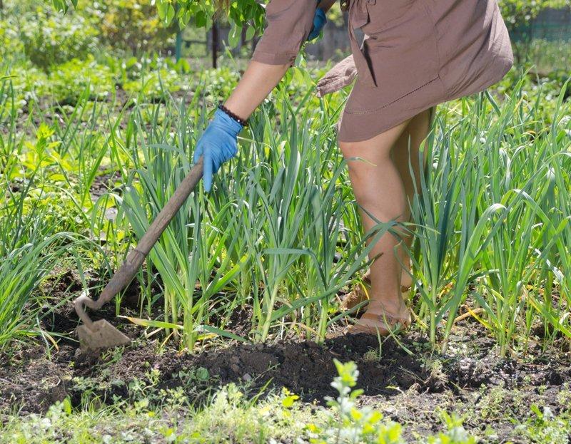 Штраф за сорняки и мусор дача, дачники, законы, картофель, туалет, штраф