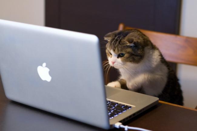 50 поразительных фактов о котиках от Михалыча