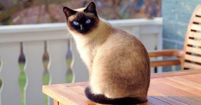 «Перестарался»: мужчина унес питомца, думая, что тот бродяжничает. Все бы ничего, но у кота уже был хозяин!