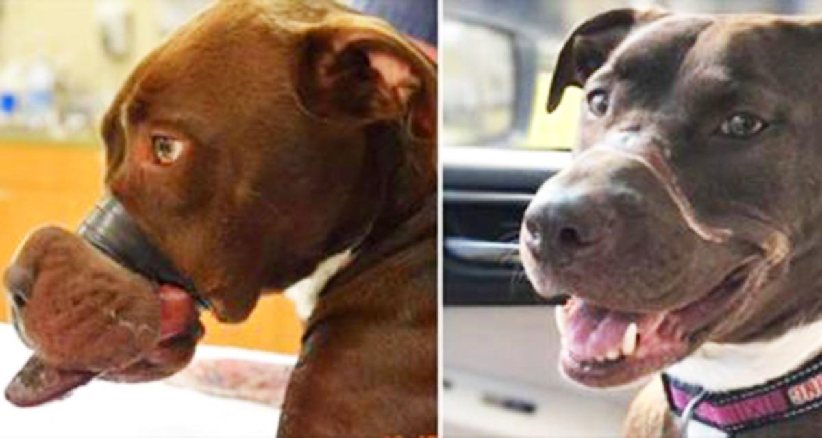 Собака 2 суток провела с заклеенной пастью…Но тот недочеловек ответил за свой поступок…