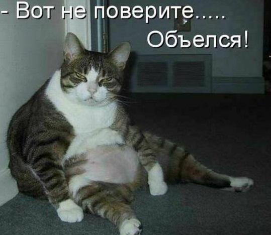 Смешные фотографии про лишний вес.