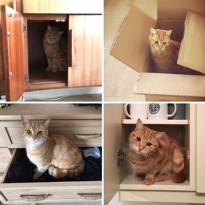 20 кошек, которые любят сидеть в самых интересных местах