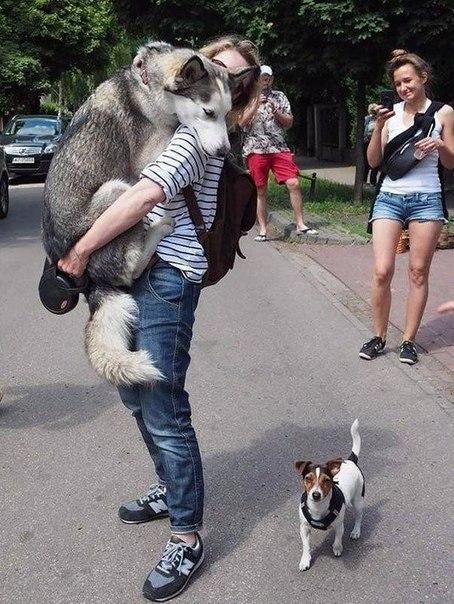 Когда завел собаку и теперь чувствуешь себя в полной безопасности: