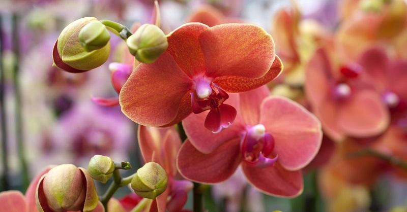 Вот как заставить цвести орхидею, которая наотрез отказывается это делать!