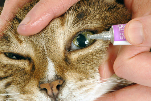 http://vokrugkota.ru/media/cat-eye-drops-e1469006990257.jpg