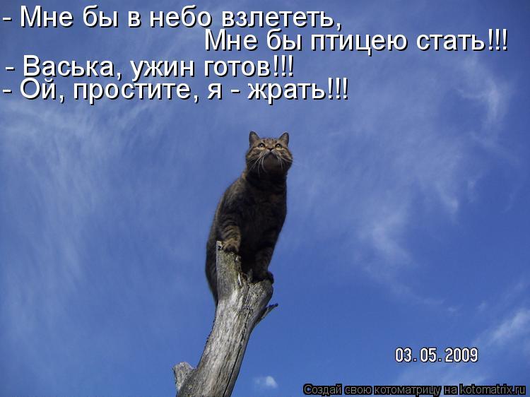 Котоматрица - - Мне бы в небо взлететь, Мне бы птицею стать!!! - Ой, простите, я - ж
