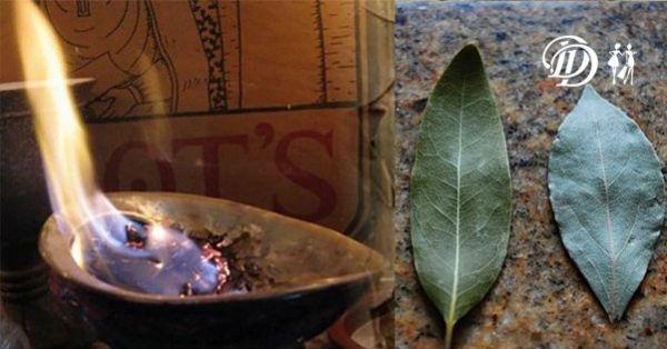 Подожгите лавровый лист в доме.