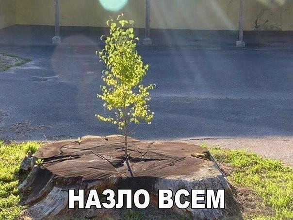 Донецк – дожди, морозы и «запреты», всем смертям на зло