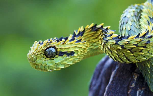 Животные, о существовании которых, вы вряд ли подозревали