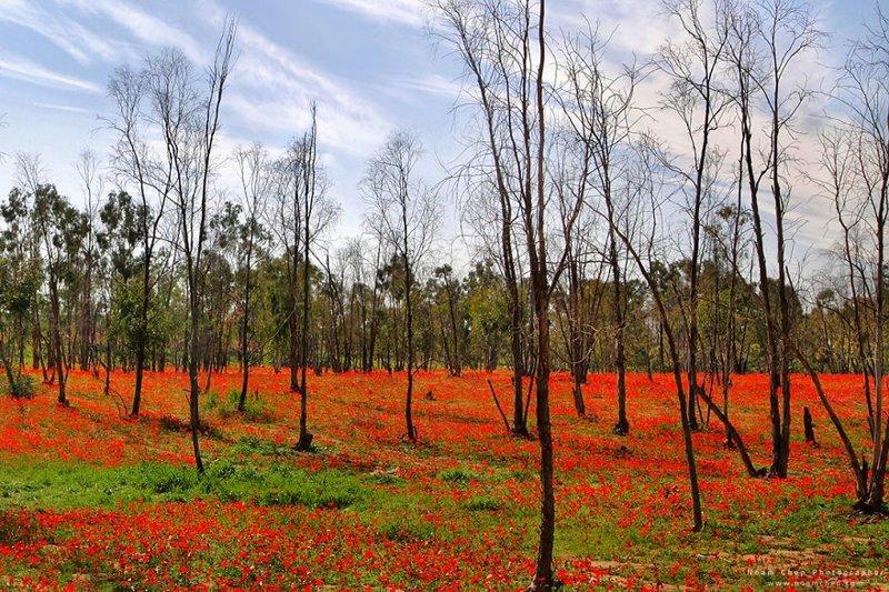 Можете не верить, но ниже - снимок пустыни. Это север пустыни Негев весной. Израиль, красиво, красивые места, природа, страны, страны мира, фото, фотограф