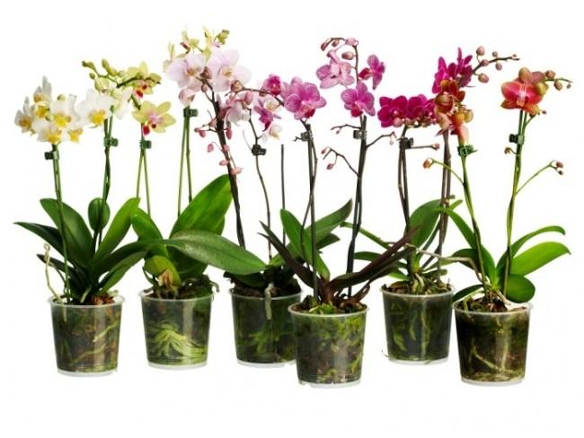 Как Одну Орхидею Превратить в Сто? Вы любите орхидеи, но боитесь, что не справитесь с уходом?