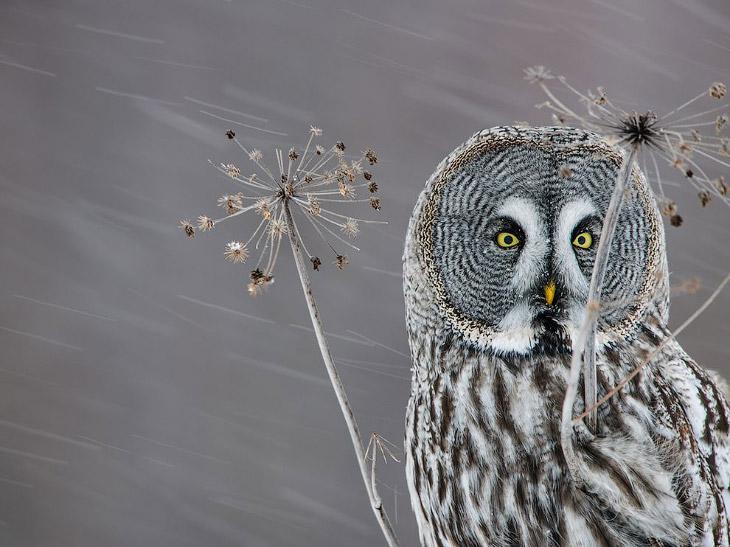 National Geographic: лучшие фотографии ноября