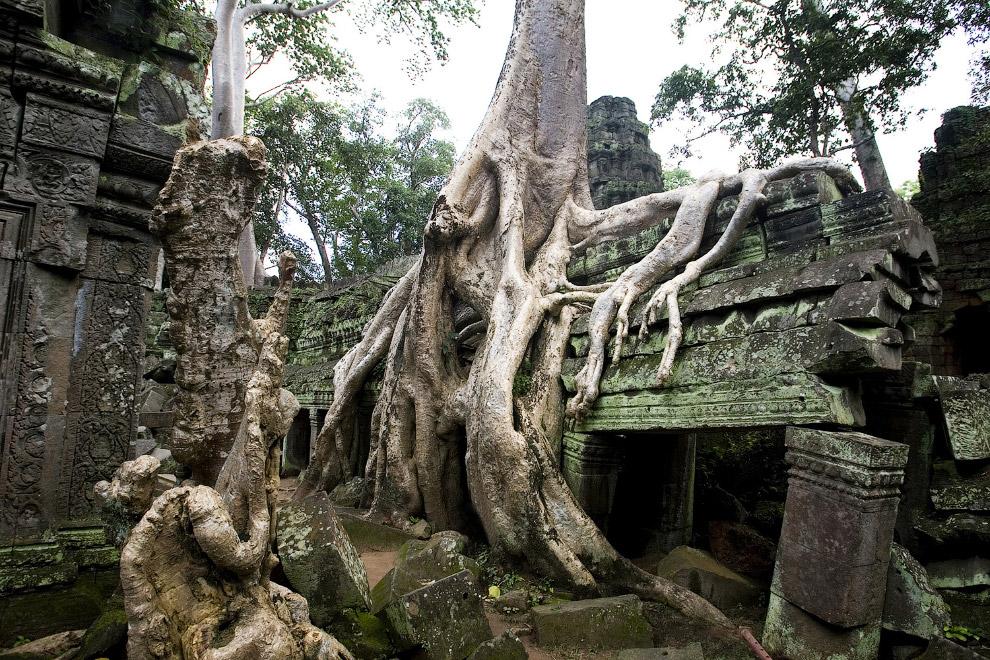 храм Та Пром (Ta Prohm),