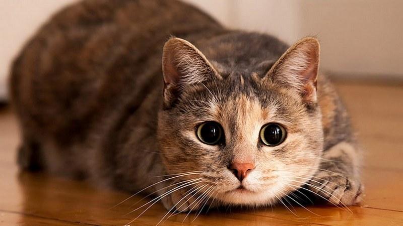 Про котей и лЯдей