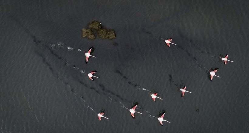 Фото дня: фламинго в лагуне Турции