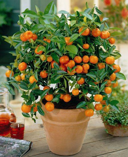 Как нарисовать апельсин маслом Сайт о рисовании